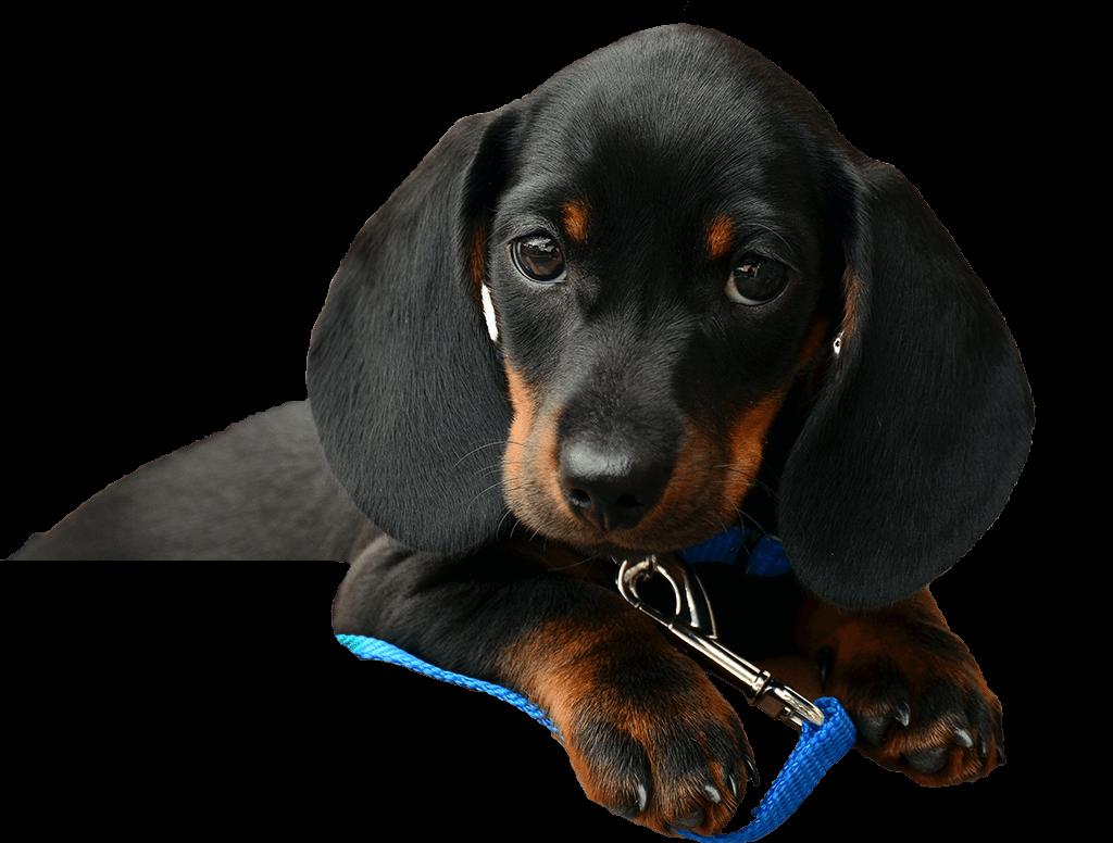 Albertslund-dyreklinik-hund