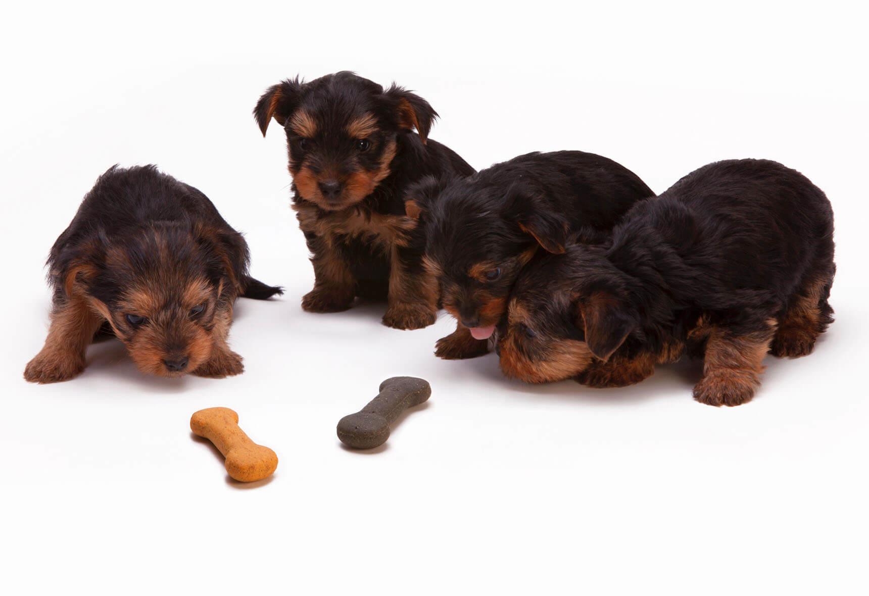 Albertslund dyreklinik Hundehvalpe med sundhed og vaccination som dyrlæge i taastrup